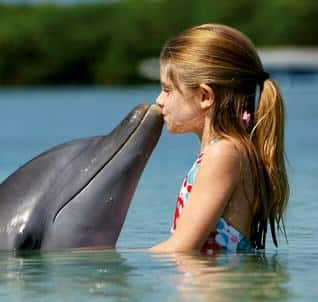 Contoh Report Text About Dolphin dan Artinya Terbaru