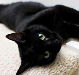 Contoh Descriptive Text About Pet (Hewan Peliharaan) dan Artinya
