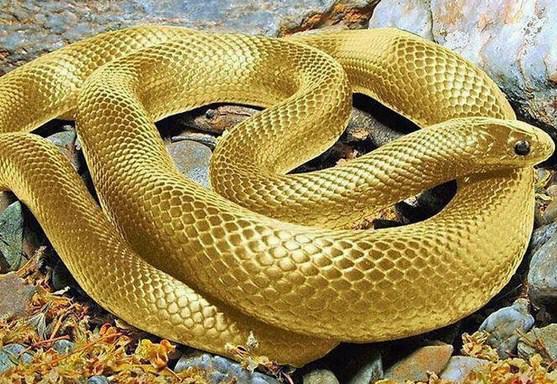 Contoh Report Text About Snake (Ular) dan Artinya