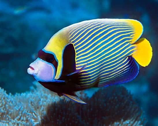 Contoh Report Text About Fish dalam Bahasa Inggris dan Artinya