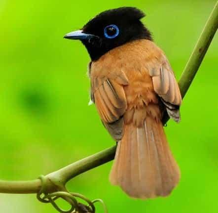 Contoh Report Text About Bird (Burung) Beserta Artinya