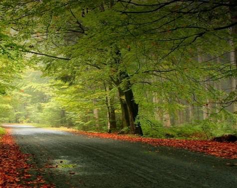 5 Contoh Puisi Bahasa Inggris Tentang Lingkungan dan Artinya