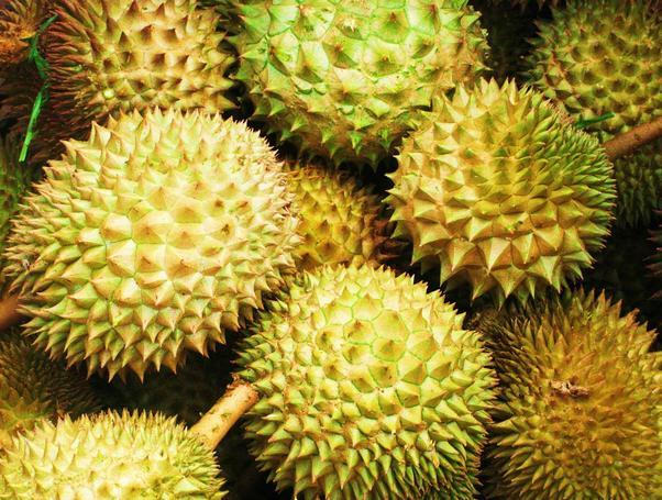 Contoh Report Text About Durian dan Artinya