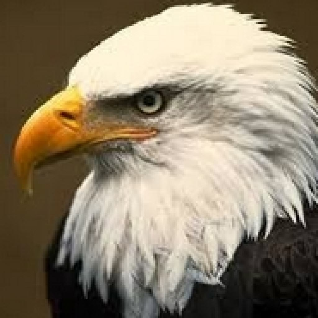Nail By Artinya: Contoh Report Text About Eagle Dan Artinya