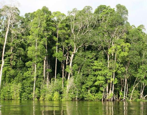 Contoh Karangan Bahasa Inggris tentang Lingkungan
